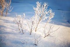 Die Winterbaumaste, die mit Schnee in der Sonne umfasst werden, beleuchten Stockbilder