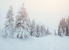 Die Winterstraße stockfotografie