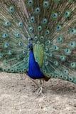 Die wirkliche Türkei Stockbilder