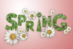 Die Wortfrühlingsbeschaffenheit eines grünen Grases, weiße Gänseblümchen auf einem rosa Hintergrund, Stockbild
