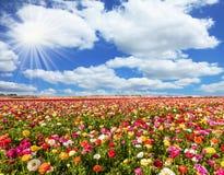 Die wunderbaren Blumen Lizenzfreies Stockfoto