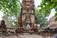 die Wurzel Buddha Stockfoto