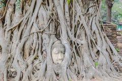 die Wurzel Buddha Lizenzfreies Stockfoto