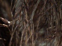 Die Wurzel des Baums Stockfoto
