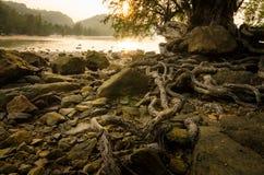 Die Wurzel des Baums im Strand- und Sonnenunterganghintergrund Lizenzfreie Stockfotografie