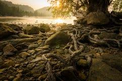 Die Wurzel des Baums im Strand- und Sonnenunterganghintergrund Stockbilder