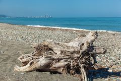 Die Wurzel des Baums am Ufer lizenzfreies stockfoto
