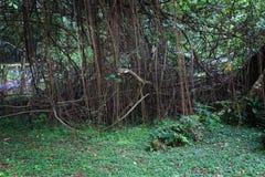 Die Wurzel vom Baum Lizenzfreies Stockbild