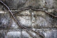 Die Wurzeln der Bäume bedeckten Backsteinmauer Stockfotografie