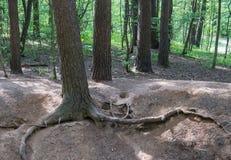 Die Wurzeln des Baums Stockfoto