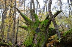 Die Wurzeln eines gefallenen Baums lizenzfreies stockbild