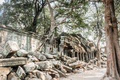 Die Wurzeln und die Tempel Lizenzfreies Stockbild