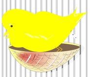 Die Züchtung des Kanarienvogels in der Gefangenschaft stock abbildung