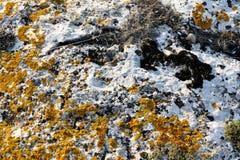 Die Zahl auf dem Stein ist gelbes und schwarzes Moos stockbild