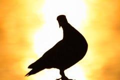 Die Zahl der Taube mit dem Sonnenaufganghintergrund Lizenzfreie Stockfotos