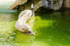 Die Zahl des Delphins ein Fragment des Brunnens von vier Flüssen, Navon-Quadrat, Rom, Italien stockbild