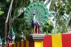 Die Zahl eines Pfaus, als buddhistisches Symbol in einem Tempel Stockbilder