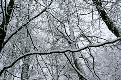 Die Zeilen des Schneewaldes Stockfotografie