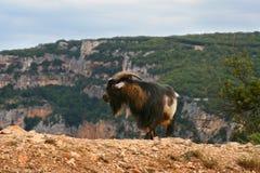 Die Ziege im Frankreich-Berg Lizenzfreie Stockfotos