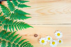 Die Zusammensetzung des Farns und der Gänseblümchen auf einem Holztisch mit Kopienraum Stockbilder