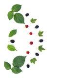 Die Zusammensetzung von Beeren und Blätter stockfotografie