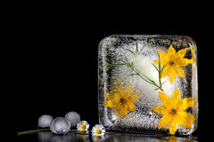 Die Zusammensetzung von gelben Blumen, eingefroren im Eis Stockfotografie