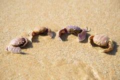 Die Zusammensetzung von vier Krabben Lizenzfreie Stockbilder