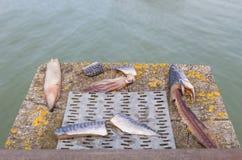 Die Zusammenstellung des Fischers Lizenzfreie Stockfotografie