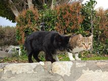 Die zwei Katzen sind sehr bequem stockfotos