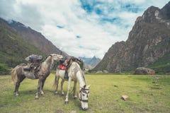 Die zwei starken Pferderuecken sind von der Fracht voll Sie auf ihrer Weise zum Dorf in dem die Inca Trail-Durchläufe sind lizenzfreies stockfoto