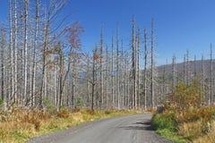 Dieback da floresta Fotos de Stock Royalty Free