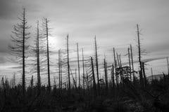 Dieback de forêt ou waldsterben en noir et blanc photo stock