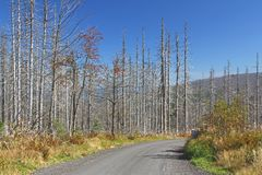 Dieback del bosque Fotos de archivo libres de regalías