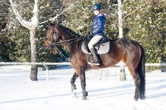 Dieci anni di ragazza che monta un cavallo nell'inverno Fotografia Stock