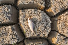 Died Fish in a dried up empty reservoir or dam due to a summer heatwave, low rainfall, pollution and drought in north karnataka,. India royalty free stock photography