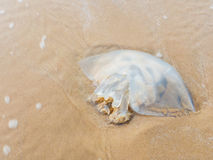Died jellyfish Stock Photography