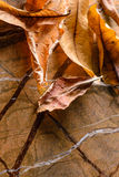Died leaf. On the brown stone background Royalty Free Stock Photography