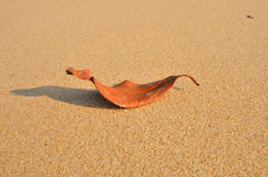 The died leaf sleeps on the sand. The died leaf with shadow sleeps on the clean sand Stock Photography