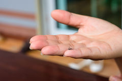 Died mosquito in woman hand. On blurred background Stock Photography
