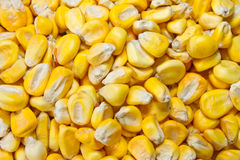 Died Organic Corn beans background Royalty Free Stock Photography