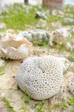 Died sea coral. On the beach, Thailand Stock Image