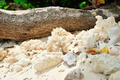 Died sea coral. On the beach, Thailand Stock Photo