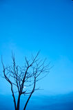 Died tree Royalty Free Stock Image