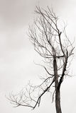 Died tree Stock Image