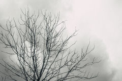 Died tree with cloudy look horror lonely sky. Black and white tone with grain effect Stock Photography