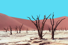 Died trees in desert Stock Images