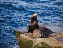 diego lwów San morze Fotografia Royalty Free