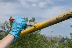 Dien een blauwe werkende handschoen in houdt een borstel en schildert een metaalpijp in openlucht in gele kleur stock fotografie