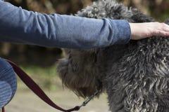 Dien hondenbont in stock foto