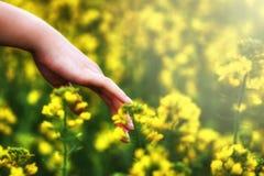 Dien vegetatie in royalty-vrije stock foto's